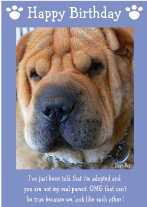 "Shar Pei-Happy Birthday - ""I'm Adopted"" Theme"